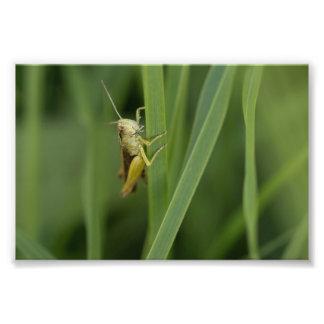 Saltamontes verde común arte fotografico