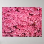Salte en rosa poster