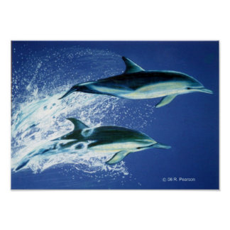 Salto de delfínes póster