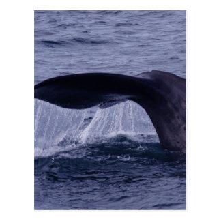Salto de la ballena de esperma tarjeta postal