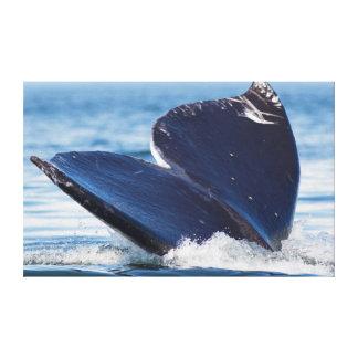 Salto de la ballena gris, canal de la capilla, impresiones de lienzo
