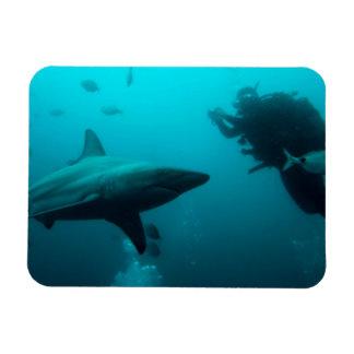 Salto de la jaula con los tiburones de Blacktip Imán Foto Rectangular