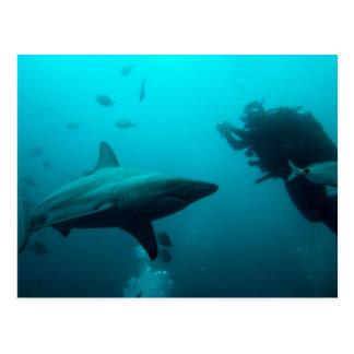 Salto de la jaula con los tiburones de Blacktip Tarjetas Postales