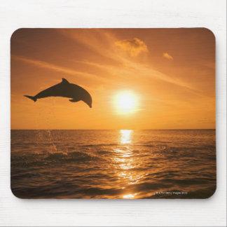Salto del delfín de Bottlenose Alfombrillas De Ratones
