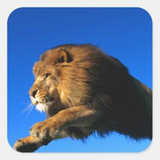 Salto del león y cielo azul pegatina cuadradas personalizadas
