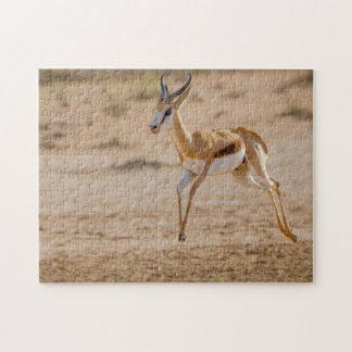 Salto masculino de la gacela (marsupiales del puzzle