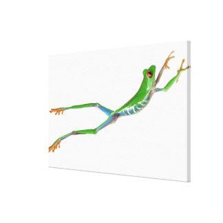 Salto observado rojo de la rana arbórea impresión en lienzo