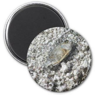 Salton Sea Magnet