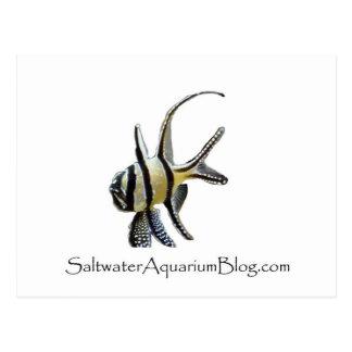 Saltwater Aquarium Blog Gear Postcard