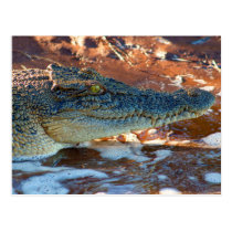 Saltwater Crocodile Postcard