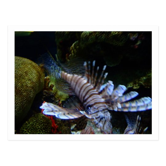 Saltwater Fish Postcard