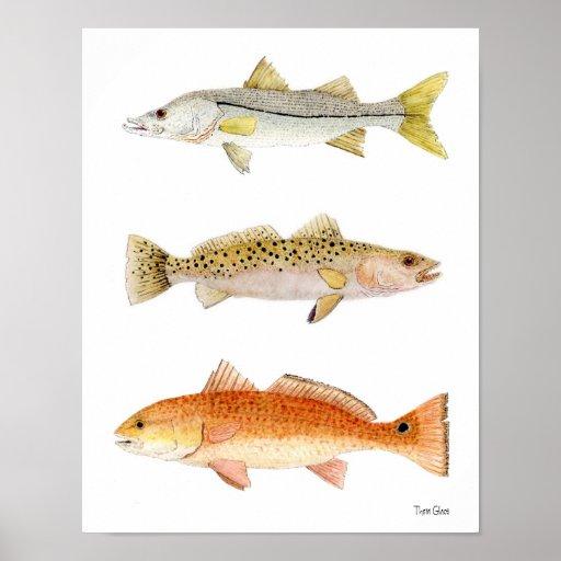 Saltwater Game Fish- Snook, Seatrout & Redfish Poster