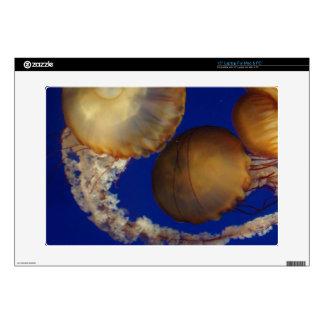 Saltwater Jellyfish Computer Skin