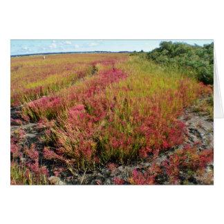 Saltwater Marsh Notecard