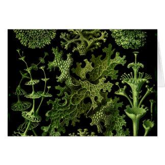 """Saltwater Plants""""Dessins sous Marin Plante"""" Card"""