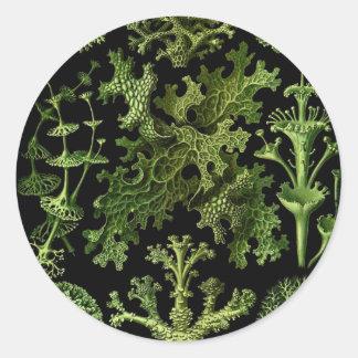 "Saltwater Plants""Dessins sous Marin Plante"" Classic Round Sticker"