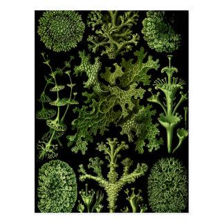 """Saltwater Plants""""Dessins sous Marin Plante"""" Postcard"""