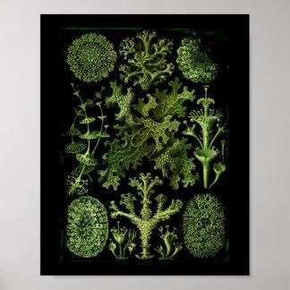 """Saltwater Plants""""Dessins sous Marin Plante"""" Poster"""