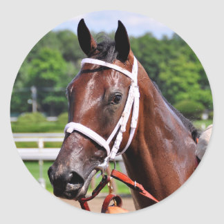 Saluda, 2 year old filly by Congaree Classic Round Sticker