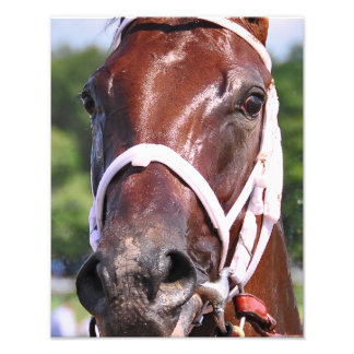 Saluda, 2 year old filly by Congaree Photographic Print