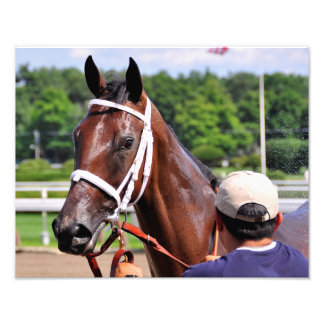 Saluda, 2 year old filly by Congaree Photograph