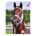 Saluda, 2 year old filly by Congaree Postcard