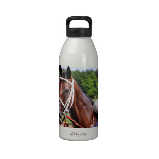 Saluda, 2 year old filly by Congaree Drinking Bottles