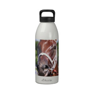 Saluda, 2 year old filly by Congaree Reusable Water Bottle