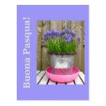 Saludo azul común de pascua de los hyacints - ital postales