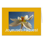 Saludo blanco de pascua del azafrán - francés tarjeta