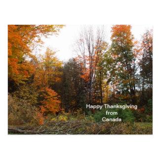 Saludo de la acción de gracias de colores del postales