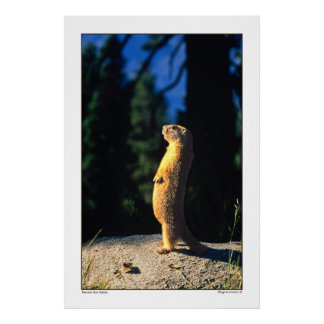 Saludo de Sun de la marmota Poster
