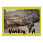 Saludo del cocodrilo de Hershey Tarjetas Postales