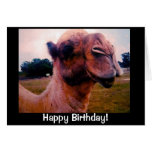 Saludo Drooling del cumpleaños del camello Tarjetas