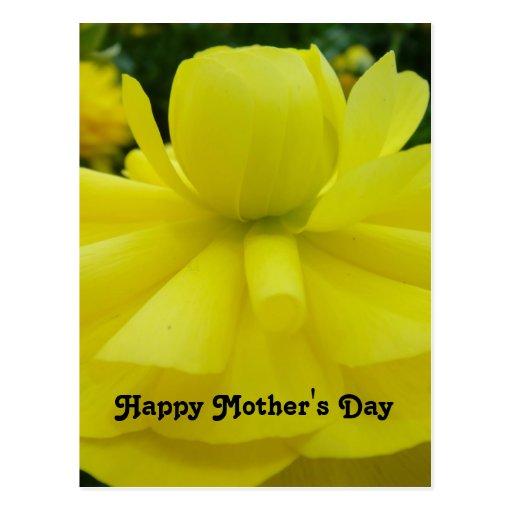 Saludo feliz del día de madres de la flor amarilla postal