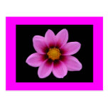 Saludo rosado del flor tarjeta postal