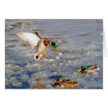 Saludo-Tarjeta del arte de la fauna del pato del p