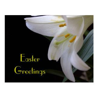 Saludos bonitos de Pascua de la flor del lirio Postal