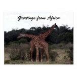 saludos cruzados de las jirafas tarjeta postal