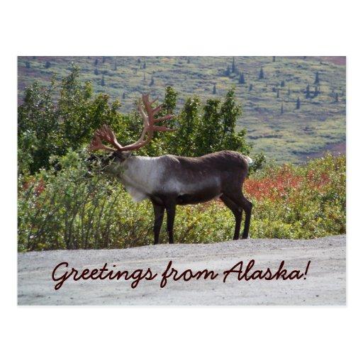 ¡Saludos de Alaska! Postales