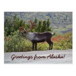 ¡Saludos de Alaska! Tarjeta Postal