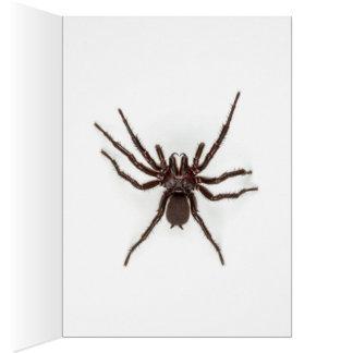 Saludos de Australia - araña del Embudo-Web Felicitaciones