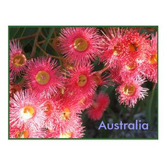 Saludos de Australia Tarjetas Postales