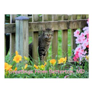 Saludos de Betterton, fotografía del gato del MD Postal