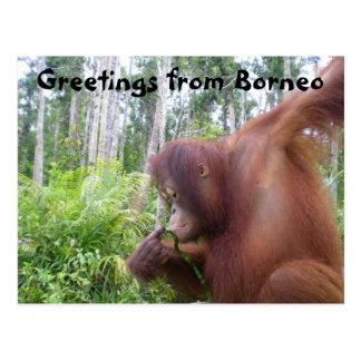 Saludos de Borneo Tarjeta Postal