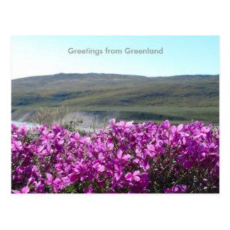 Saludos de Groenlandia 10 Tarjetas Postales