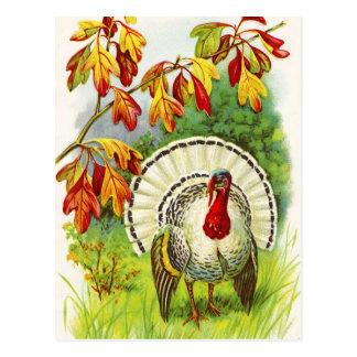 Saludos de la acción de gracias tarjetas postales