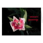 Saludos de la flor de molinillo de viento felicitación