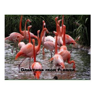 """""""Saludos de la Florida,"""" postal de los flamencos"""