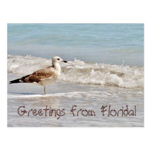 Saludos de la gaviota de la Florida Miami Postal